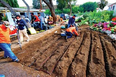 Drip Irrigation Andy S Sprinkler Service